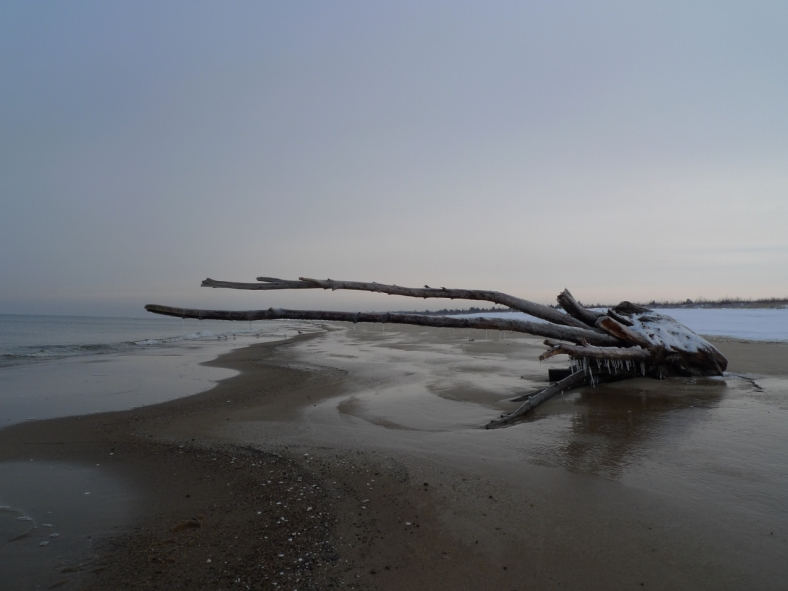 Stogi_Beach_12