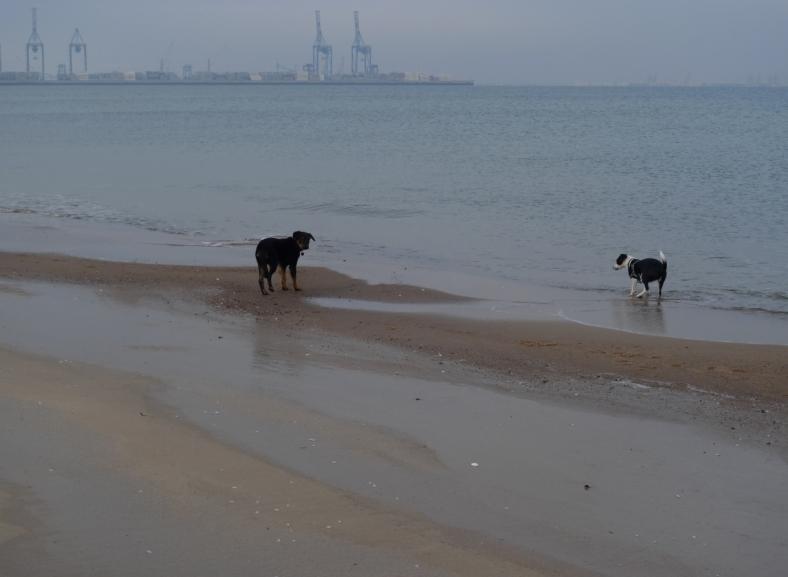 Stogi_Beach_17